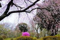 お花見日和ではなかったけれど・・・ (続き) - ぶらり散歩 ~四季折々フォト日記~