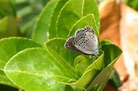 和歌山クロツ - 蝶と自然の物語