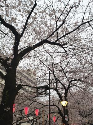 韓国の友達念願の目黒川の桜! - Kirana×Travel