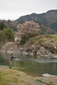 山はそろそろ萌木色に‥ - 鈴木寿のブログ  フライフィッシングな毎日