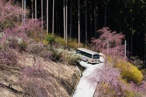 2019桜撮影第4章 高見の郷(一目千本のしだれ桜) - Turfに魅せられて・・・(写真紀行)