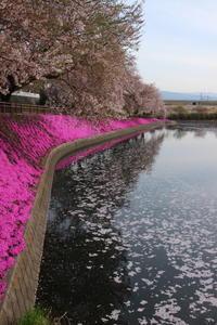 花いかだ(2) 谷地沼① (2019/4/17撮影) - toshiさんのお気楽ブログ
