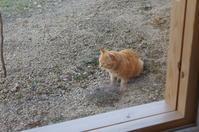 キャットミントに猫 - 函館の建築家 『北崎 賢』日々の遊びと仕事