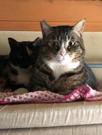 顔枕 - 愛犬家の猫日記