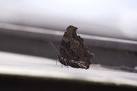 散歩といえば蝶 - いつもの空の下で・・・・