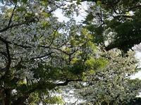 ◆ネットの不具合で…まだ桜の季節の——— - ☆彡ちいさな幸せ☆彡別館