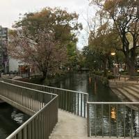 四季彩鉄板くさの @ 岡山市北区田町 - のんびりいこうやぁ 2
