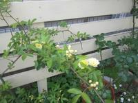 庭の花&かごを♪ - Petit mame