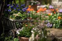 春から初夏へ移ろう英国庭園 - Soul Eyes