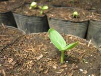 苗たち - 南阿蘇 手づくり農園 菜の風