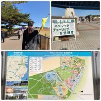 ネモフィラのひたち海浜公園へ②(ネモフィラといちご狩り) - リタイア夫と空の旅、海の旅、二人旅