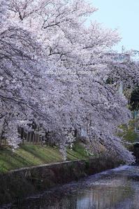 花びら浮かぶ - my FHOTO