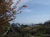 サクラ吹雪がきれいです - 神戸布引ハーブ園 ハーブガイド ハーブ花ごよみ
