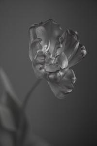 どんな花も - 日々の皿