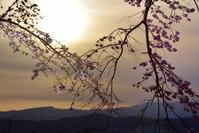 烏帽子山公園夜桜 - yama10フォトライフ