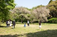 【活動記録】4/20 お花見朝練 - 相模原・町田エリアの写真サークル「なちゅフォト」ブログ!