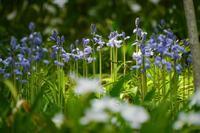 4月の赤塚植物園〜後編 - 柳に雪折れなし!Ⅱ