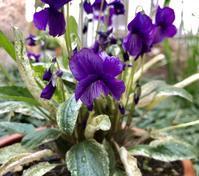四月の庭に咲く花 - 笑わせるなよ泣けるじゃないか2