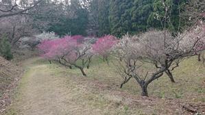 初の梅林園 -