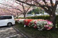 日野中央公園(横浜市港南区) - HAMAsumi-Life