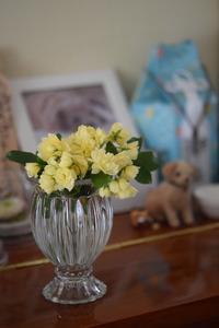 cottonそっくりなキャンドル と お庭のお花 - my story***