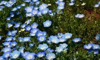 俣野別邸公園の春の花 - ソナチネアルバム