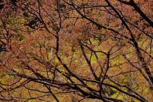若葉の季節ー1 - MAKO'S PHOTO