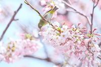 花鳥 - ひとり野鳥の会