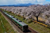 みちのく白石川堤千本桜3 - みちのくの大自然