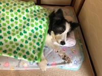 寝たきり - 犬とお散歩