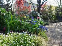 木漏れ日に透ける春 - 永楽屋ガーデン    自然を愛する スローライフな庭造り