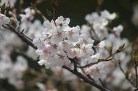 花盛り - 菜やの便り