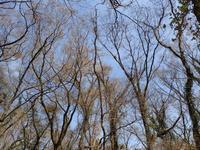 三瓶山中国自然歩道芽吹く - 清治の花便り