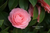 桜*さんぽ番外編・前編 - FUNKY'S BLUE SKY