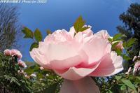 いいお天気に誘われて色々な花を見て来ました♪ - 四季彩の部屋Ⅱ