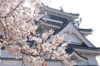 桜とお城 - haruironokaze*