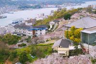 千光寺公園桜 - Blue Planet Cafe  青い地球を散歩する