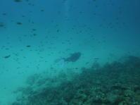 糸満のあらゆるところで~糸満近海・ルカン礁ガイド付きボートダイビング(ファンダイビング)~ - 沖縄本島最南端・糸満の水中世界をご案内!「海の遊び処 なかゆくい」