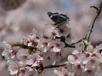 蝶色々 - 風任せ自由人