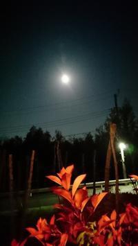 昨夜の満月 - まほろのうたかた日記