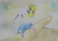 手って大好き - Blue & Yellow Budgie