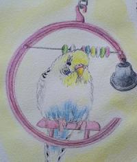 ピンクのC型ブランコ - Blue & Yellow Budgie