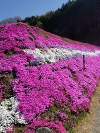 芝桜💕 - takakomamaのキルトパラダイス
