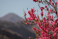 桃と冨士写ヶ岳が美しい山中温泉湯の出町商店街 - 酎ハイとわたし