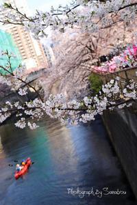 2019年目黒川の桜 - SMILE PHOTO