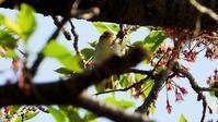 府中方面夏鳥探索4/20 - 山と鳥を愛するアナパパ