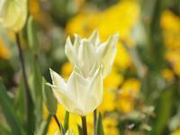『花・ハナ・はな・hana・・・・・❀』 - 自然風の自然風だより