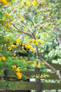 4/20眩しい緑春本番 - 「あなたに似た花。」