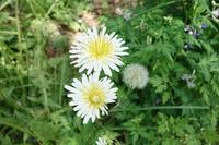 Today's plant collection2019/04/20 - 丙丙凡凡(蛙声diary)