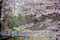 Spring N絵wYork 2019-900作品達成記念④ー - Triangle NY